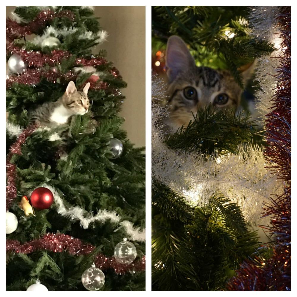 Cozy around the ULTIMA Christmas Tree! - DEAL MAMA