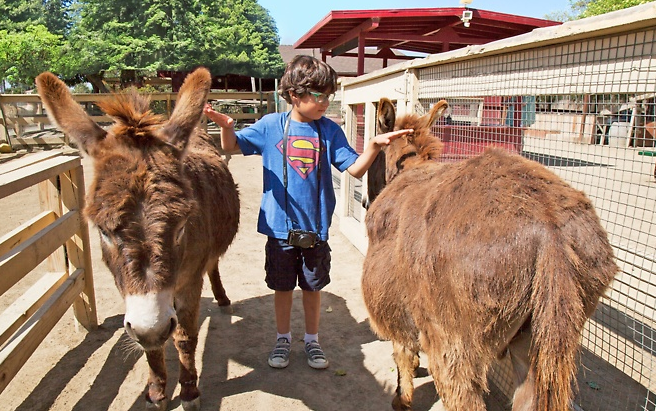 Zoomars Discount Only 22 For 4 Petting Zoo Tickets Train Rides